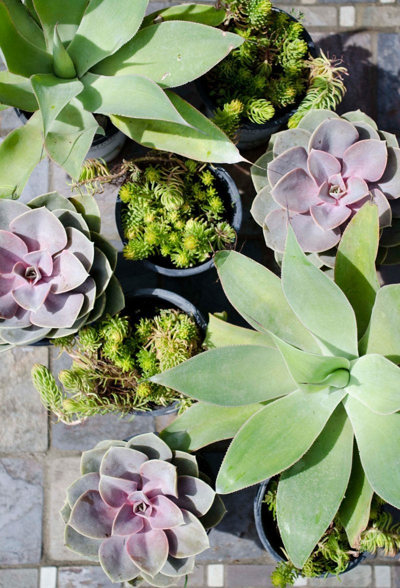 THE BEST PLANTS FOR A LOW MAINTENANCE WINDOW BOX | Thou Swell http://thouswell.com/the-best-plants-for-a-carefree-window-box/