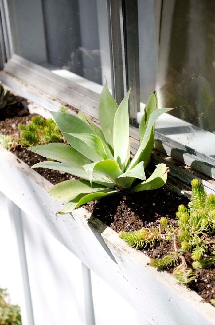 The Best Plants For A Low Maintenance Window Box Thou Swell Http