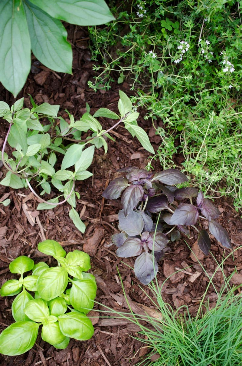 Plant a kitchen herb garden complete with all of the fresh herbs you need for tasty summer cooking.