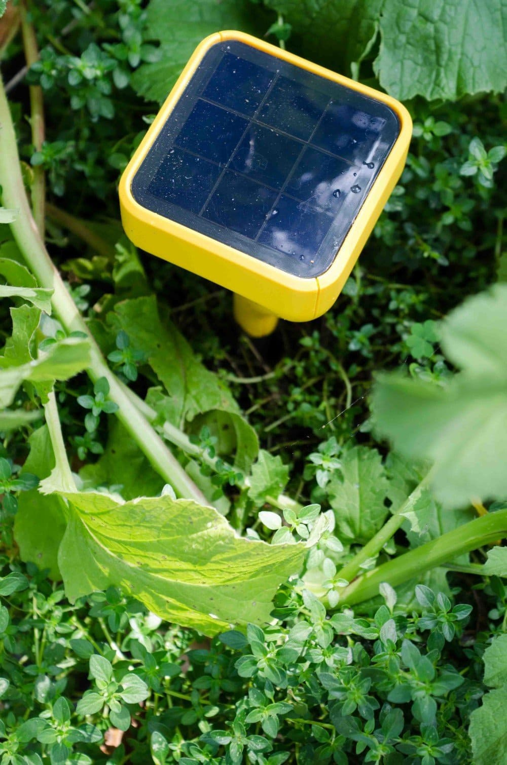 A new garden technology that's changing the way I work in the garden.