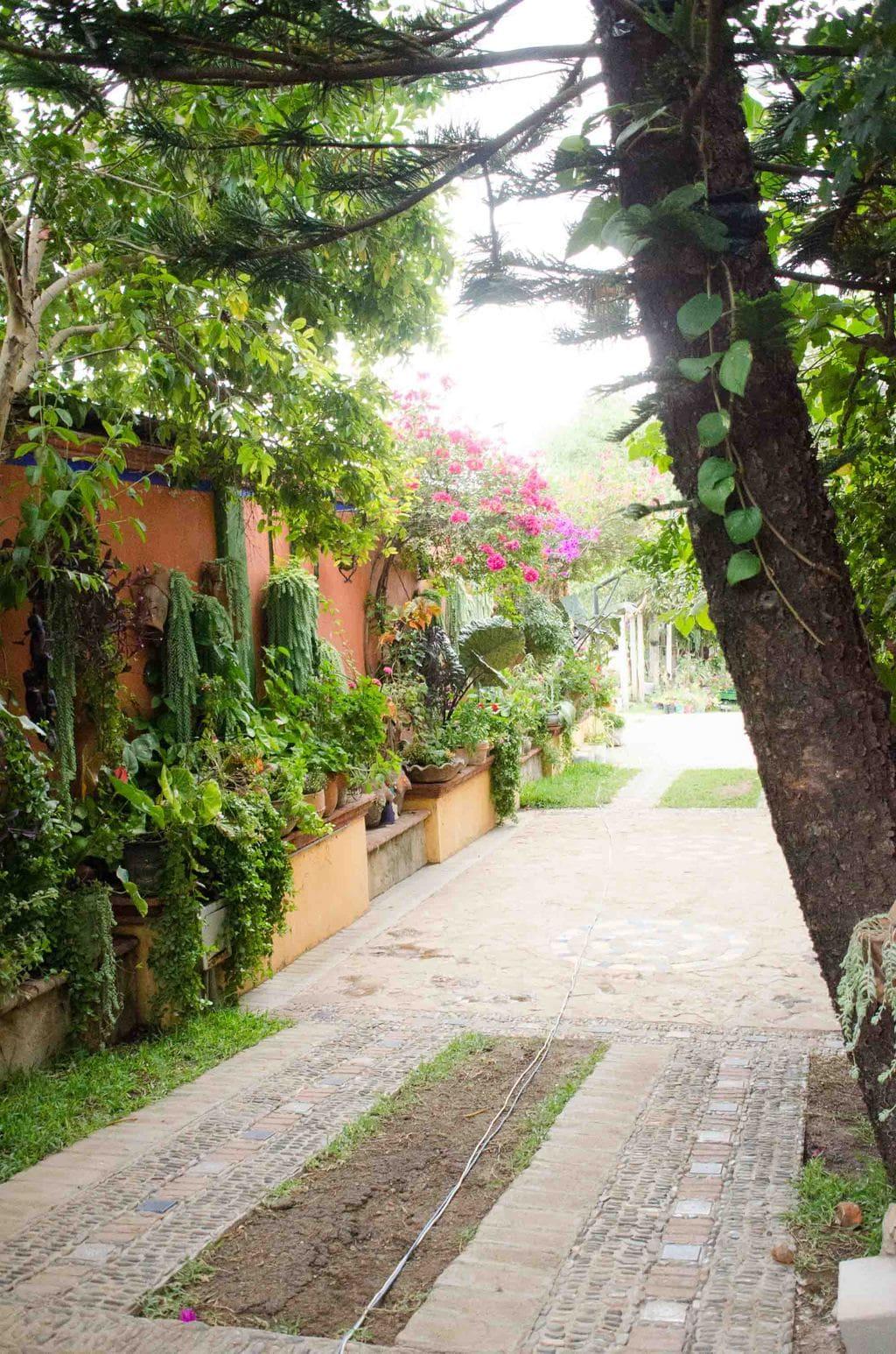 Garden courtyard driveaway in Oaxaca, Mexico