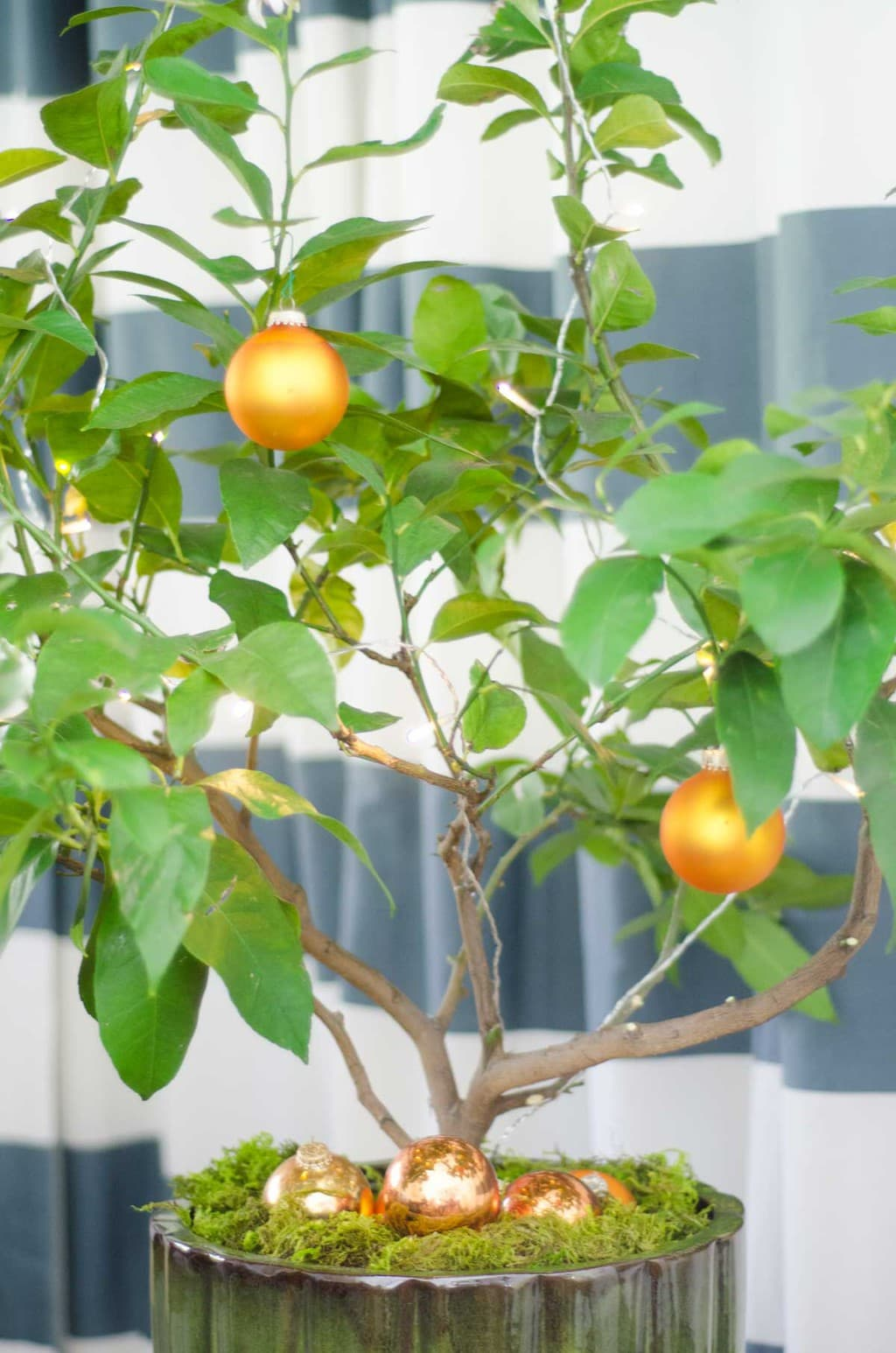 Small Space Holiday Citrus Christmas Tree Thou Swell