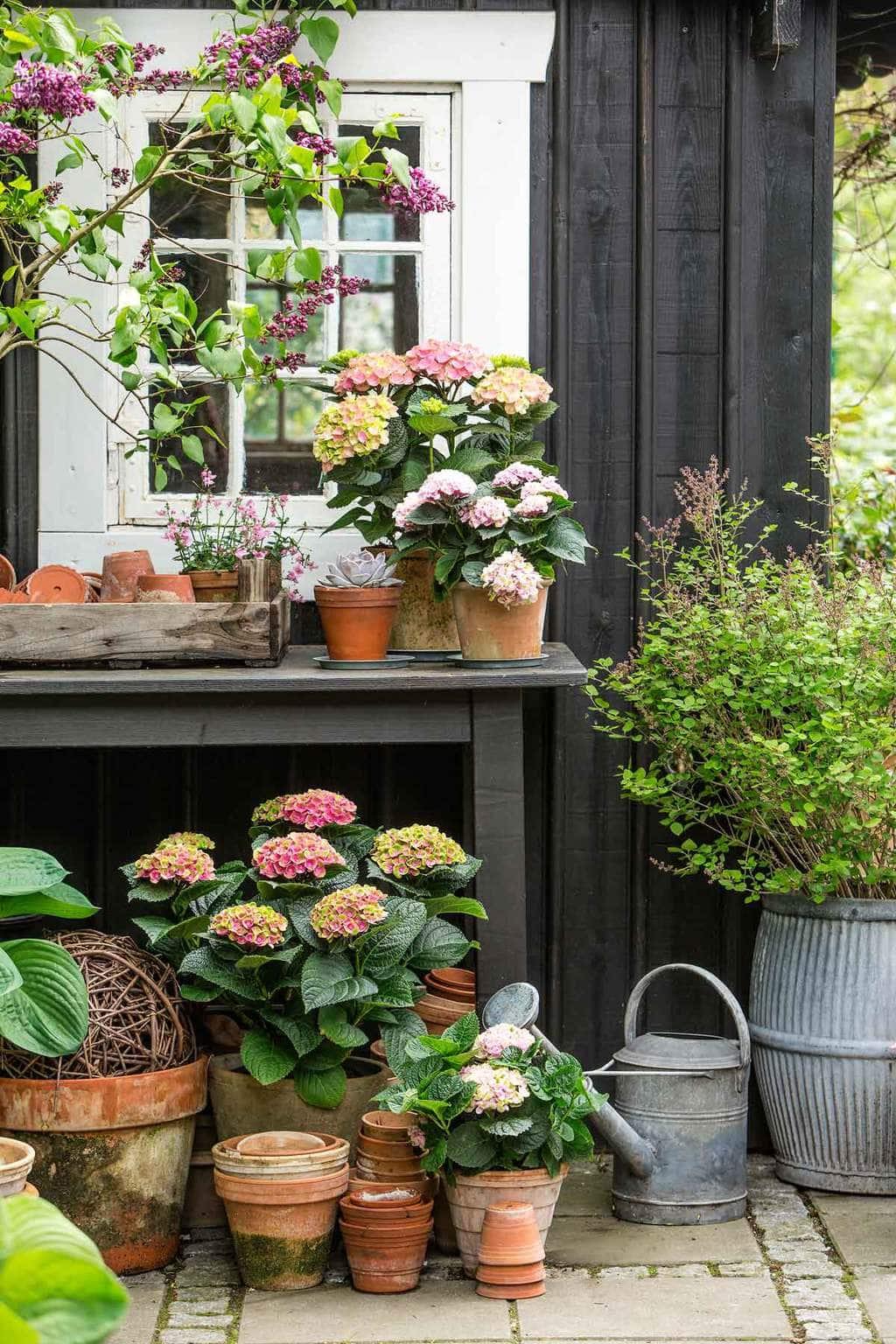 Hydrangea potting table via @thouswellblog