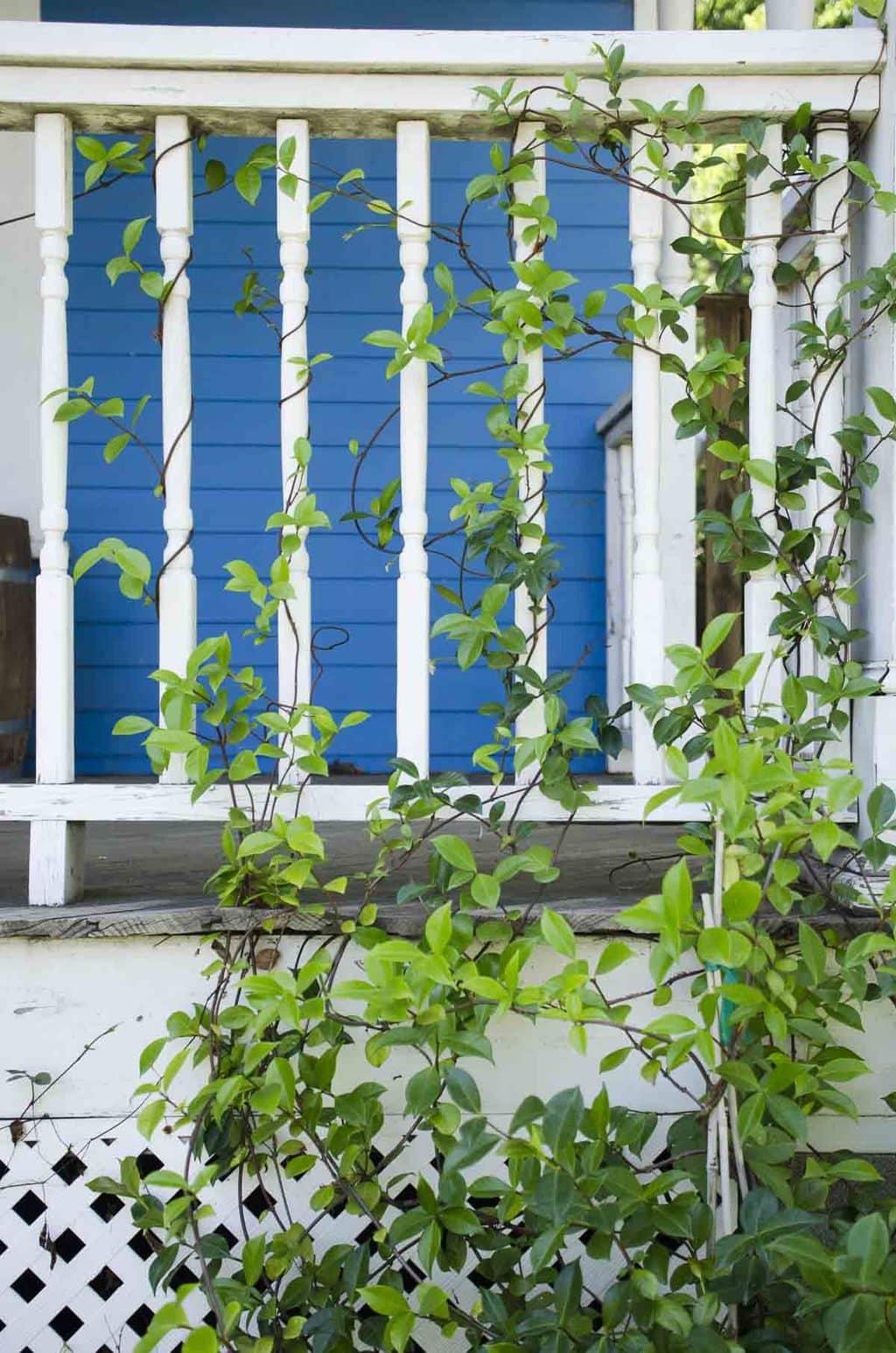 Jasmine on porch railing via @thouswellblog