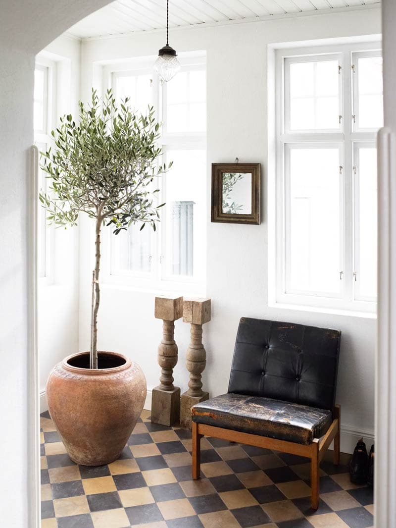 Indoor Olive Tree With Vintage Black Leather Chair And Checkerboard Floor  On Thou Swell @thouswellblog