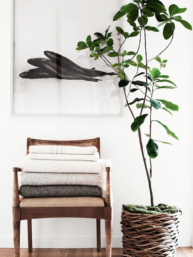 6 Ways to Give Houseplants a Chance - Thou Swell Indoor House Plants Basket on indoor plant cage, indoor plant watering can, indoor plant cart, indoor plant box, indoor plant trellis, indoor plant ladder, indoor plant cabinet, indoor plant trough, indoor plant stool, indoor plant vase, indoor plant with lights,