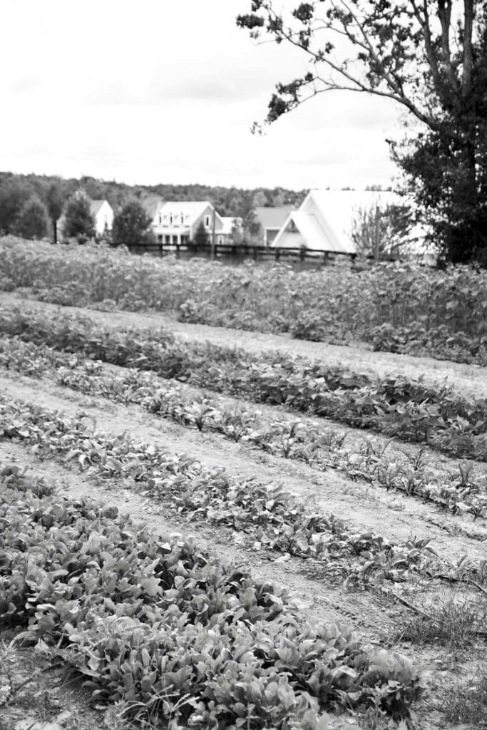 Farm in black and white at Serenbe, Georgia on Thou Swell @thouswellblog