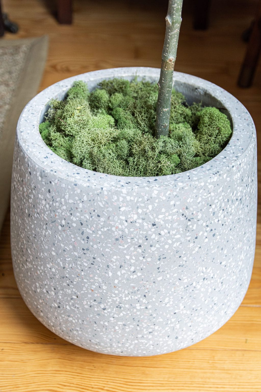Modern Terrazzo planter with indoor olive tree and leaning floor mirror, townhouse design ideas by Kevin O'Gara on Thou Swell #article #myarticle #abiskosofa #bluesofa #moderndesign #livingroom #livingroomdesign #homedecor #homedecorideas