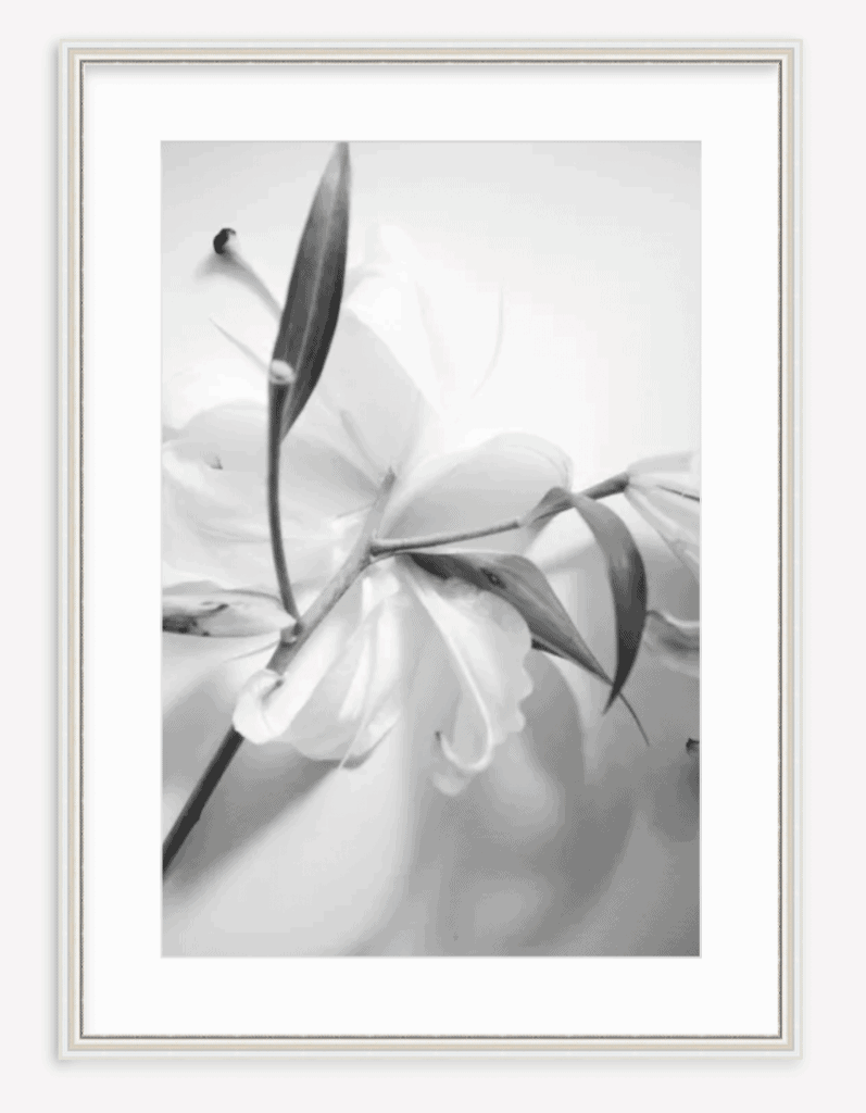 Lily black and white photography framed fine art print by Kevin O'Gara on Thou Swell #artprint #wallart #framedprint #fineart #photography